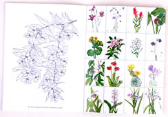 page from American Wild Flowers Coloring Book