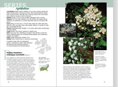 page from Haws - A Guide to Hawthorns of the Southeastern United States by Ron Lance