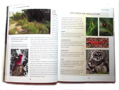 page from National Wildlife Federation Attracting Birds, Butterflies and Other Backyard Wildlife by David Mizejewski