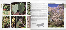 page from Nonnative Invasive Plants of Southern Forests by James H. Miller