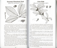 page from Common Forest Trees of North Carolina: How to Know Them