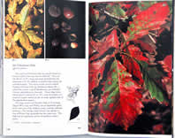 page from Fall Color and Woodland Harvests by C. Ritchie Bell and Anne H. Lindsey
