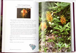 page from Wild Orchids of South Carolina: A Popular Natural History by Jim Fowler