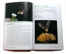 page from The Wildlife Gardener's Guide by Janet Marinelli